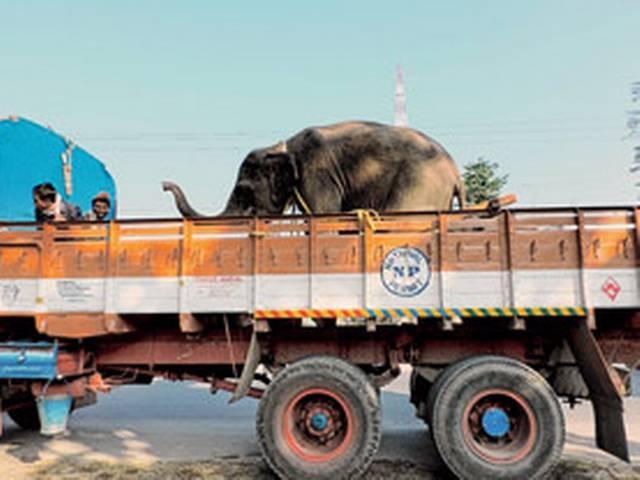 सुनंदा के बाद अब हाथी के विवाद में फंसे थरूर