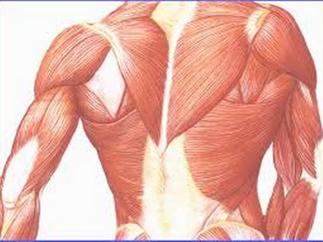 अब लैब में विकसित होंगी मांसपेशियां