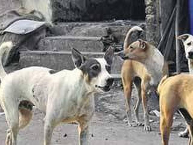 _stray _dogs _kill _12 _year _old