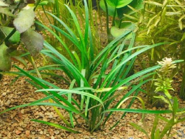 plants_resarch_genes