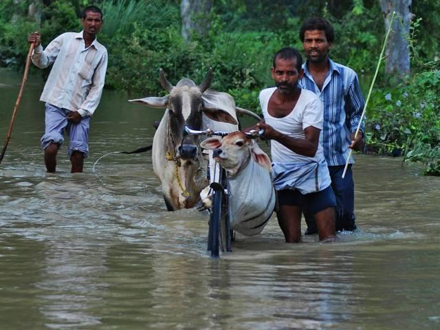 Bihar flood affected struggling for a fist of rice