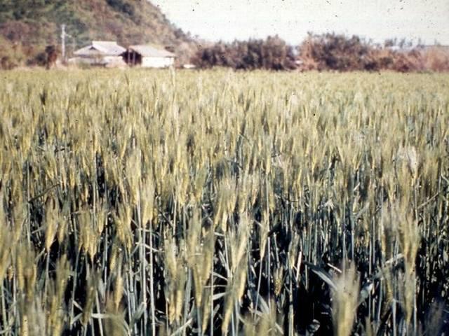farming_ranchi