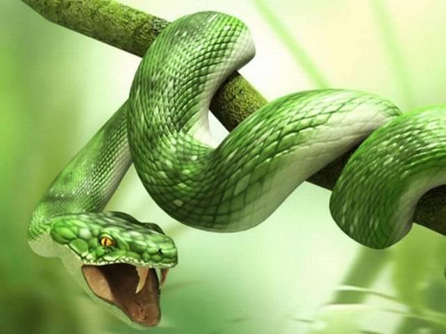 new snake
