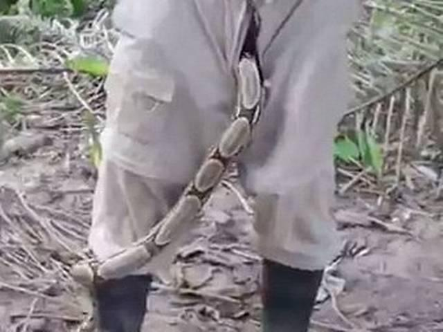 The moment a massive boa constrictor slithers out of a man's trousers