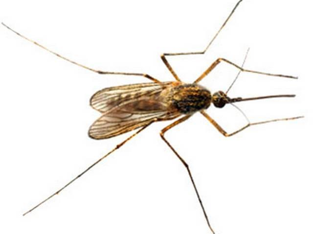 Malaria parasite's drug resistance decoded
