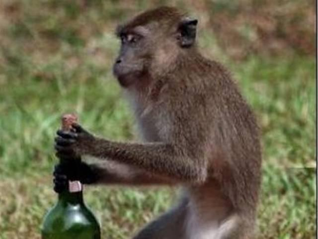 man-monkey-wine