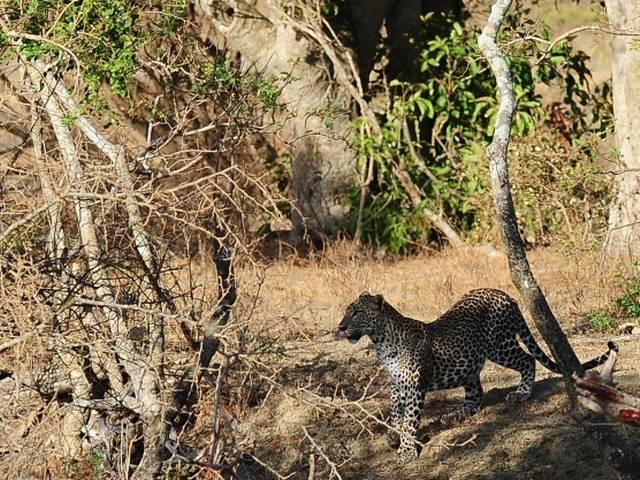 leopard seen in noida, delhi ncr