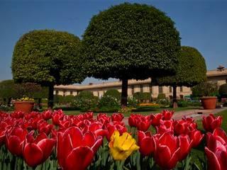 Delhi: Mughal Garden opens for public from February 13