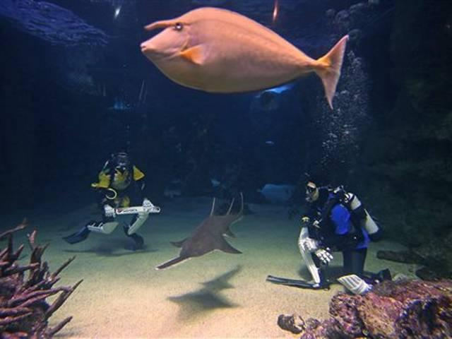 World Cup 2015_Australia_Sri Lanka_Sydney Aquarium_