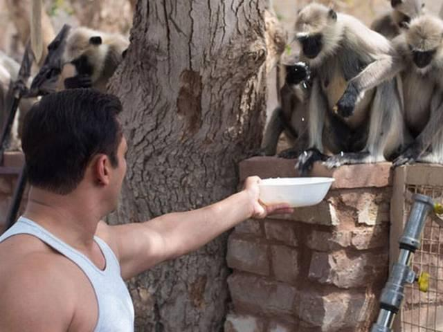 Snapped: Salman Khan's Adorable Pictures With Monkeys