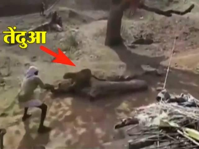 Video: Brave watchman fights off leopard with just a stick in Madhya Pradesh village