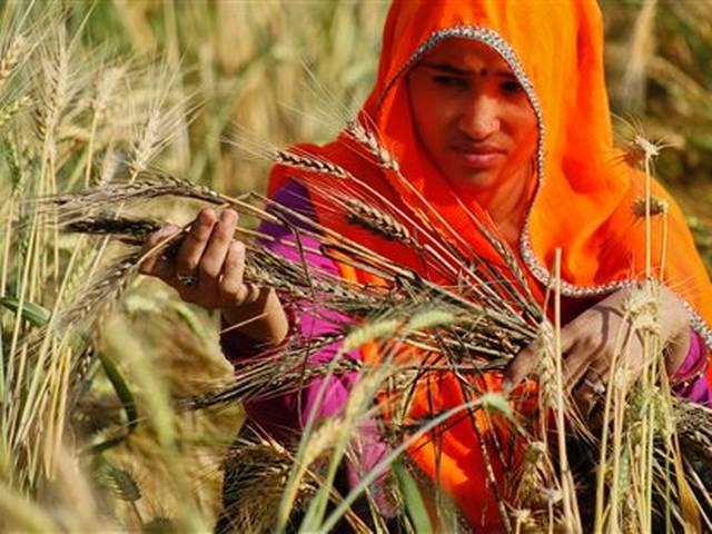 BJP demands bonus for wheat farmers in Bihar