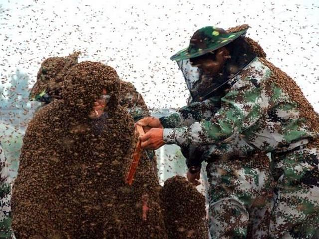 Man covered in 1.1 million bees sets Guinness World record