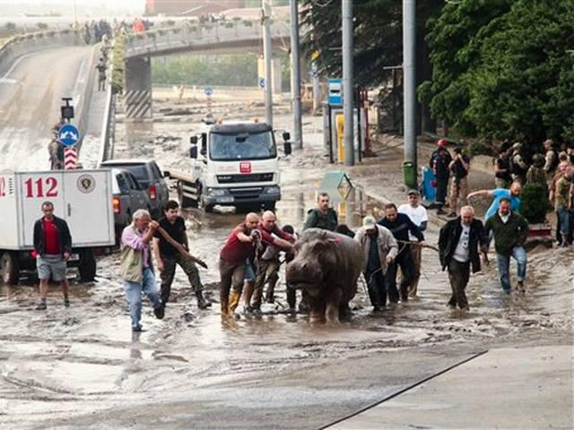 Zoo Animals on the Loose in Tbilisi After Flooding