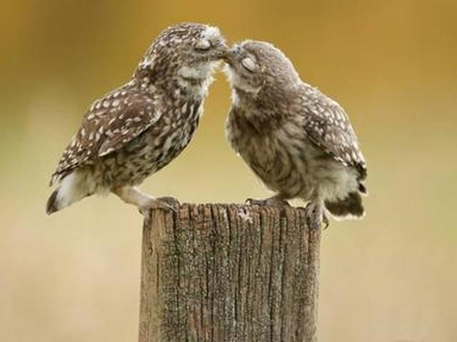 america's national kissing day