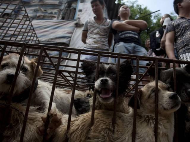 dog meat fest
