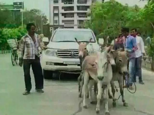 OWNER_GETS_DONKEYS_TO_PULL_HIS_LAND_CRUISER