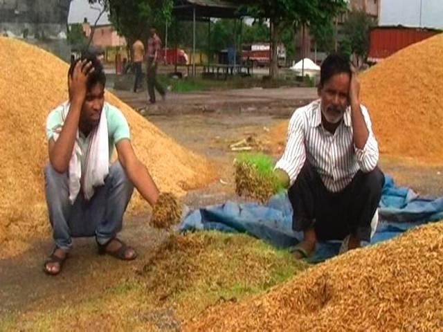 delhi: quintiles of food grains got destroyed because of rain