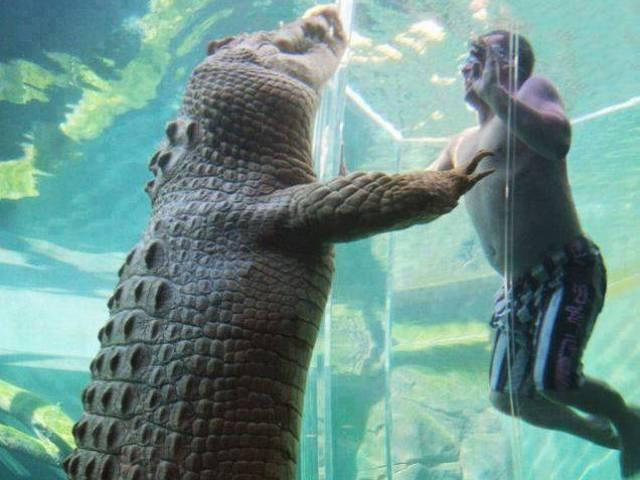 Australia's New Crocosaurus Cove Park In Darwin Sees Thrill-Seekers Swimming Face-To-Face With A Massive Saltwater Crocodile