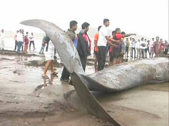 33-feet-long whale washed ashore in Tamil Nadu