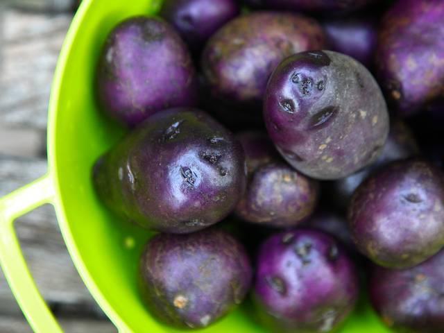 Purple potatoes can terminate colon cancer cells