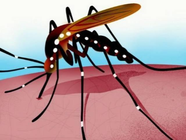 Dengue scare: Total 831 cases; 778 in Aug only