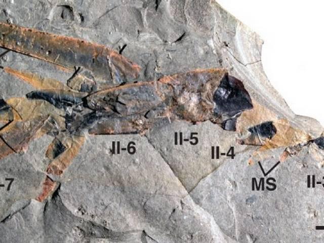 Scientists Find World's Oldest Sea Scorpion