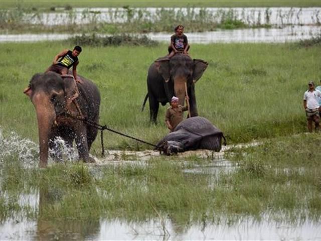 India Flood Wildlife