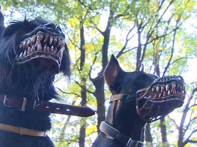 Terrifying muzzle designed to keep dog owners safe at night will transform your dog warewolf