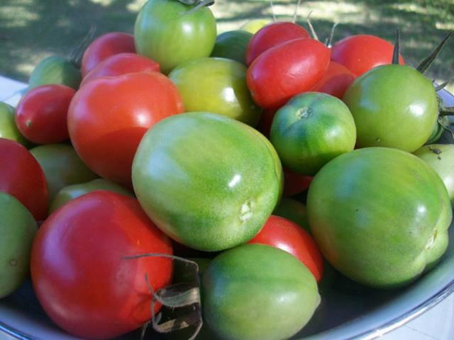 Apples and green tomatoes can help you fight ageing