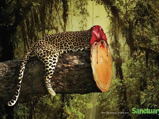 powerful images to send a message to preserve wildlife