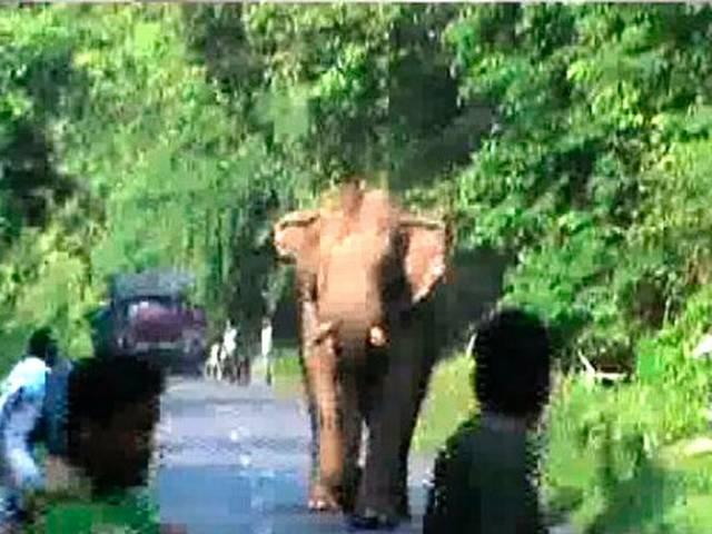 Elephant Goes on Rampage in West Bengal's Jalpaiguri District