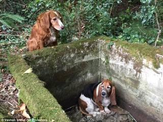 Dog stands guard for a WEEK with her trapped friend