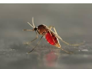 Dengue Prevention for the Rainy Season