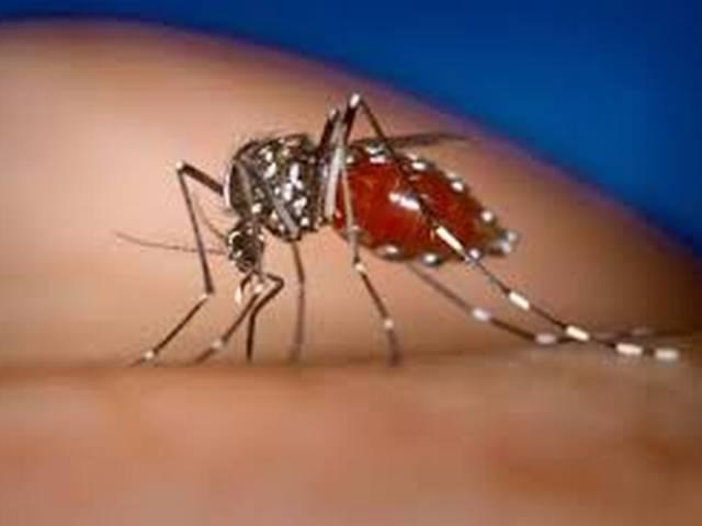 delhi: dengue kills five in day