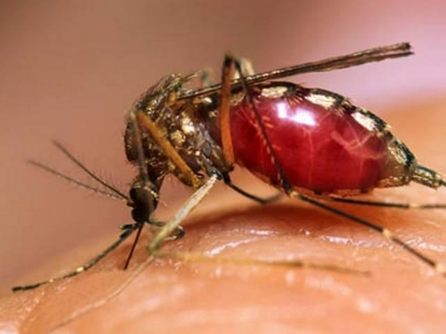 92 percent of people do not know dengue mosquitoes: survey