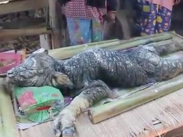 Mysterious creature which appears to be a hybrid between a crocodile and a buffalo terrifies villagers in Thailand
