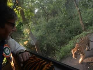 a tiger chased amitabh for four kilometres