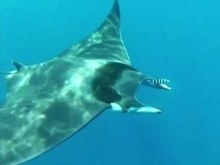 sea monster caught on camera