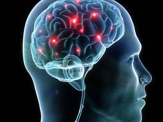 Brain Size Does Not Appear to Influence IQ