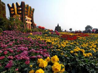Chinese chrysanthemum enters Guinness record book