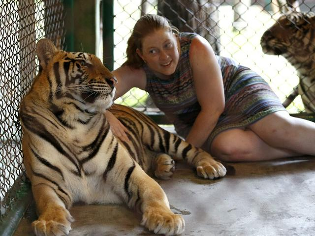 Tourists_Toddlers_Close_Tigers_Cage