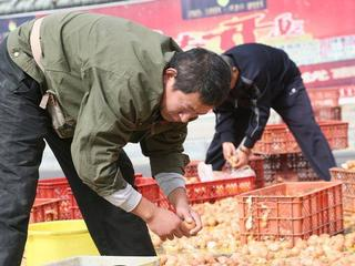 truck accident makes thousand of eggs to fall and break