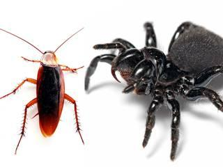 spider-flushed-man-ear-crawled-inside-whilst-sleeping