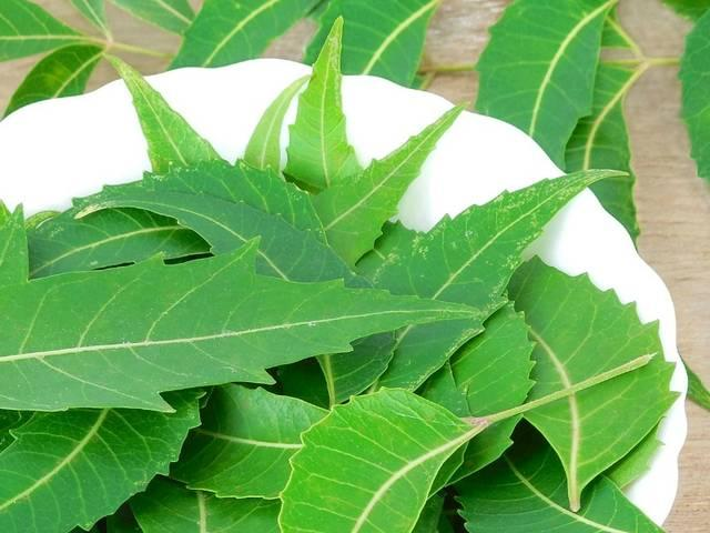 The Benefits and Uses of Neem and leaf