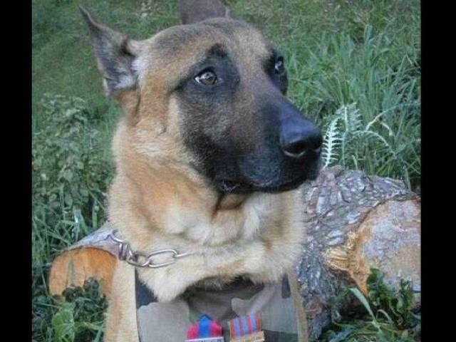Russia Sends Puppy to French Police to Replace Fallen Police Dog