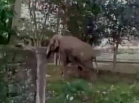 Watch: Rampaging elephant damages around 100 houses in Siliguri