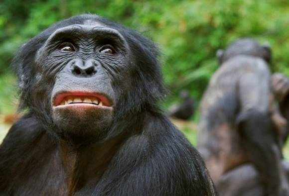 Do chimps believe in God? Mysterious 'ritual' captured
