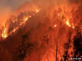 Forest fires rage across Uttarakhand, 6 die since February