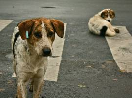 "Soon South Delhi may have ""No street dogs"""
